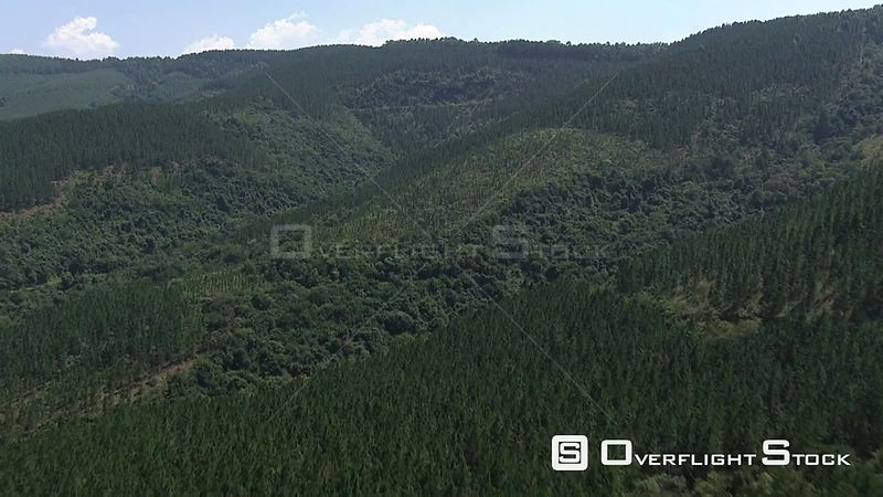 Aerial shot of a forest of trees Nelspruit Mpumalanga South Africa