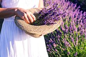 Close up of woman holding hat with lavender flowers, Provence, France