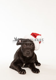 Small black puppy wearing Santa hat on white background