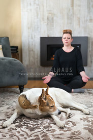 reiki practitioner working with husky dog