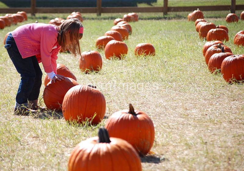 Young girl looking at pumpkins at a pumpkin patch
