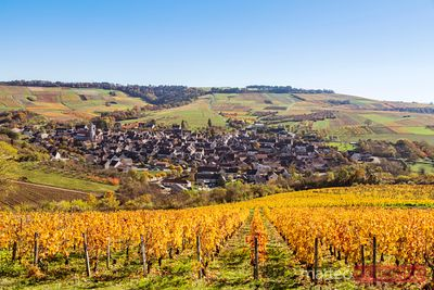 Vineyards surrounding Irancy, Burgundy, France