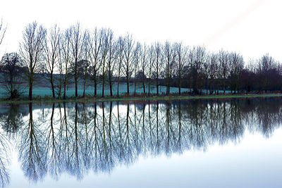 Reflection Of Trees Across a Flooded Field