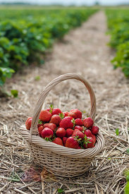 Germany, Saxony, Basket of strawberries in field, close up