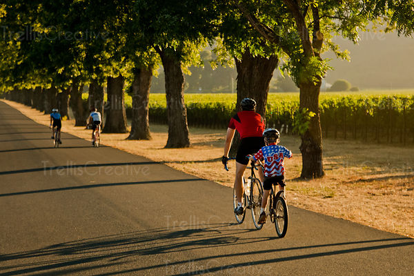 A family rides their bikes along a quiet country road lined with vineyards in Napa Valley