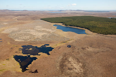 Aerial view of Forsinard Flows blanket bog, with pine plantation in the background, Forsinard, Caithness, Scotland, UK, May. ...