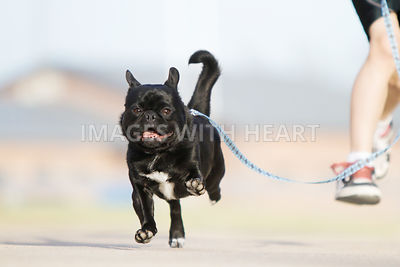 Small black dog running with boy
