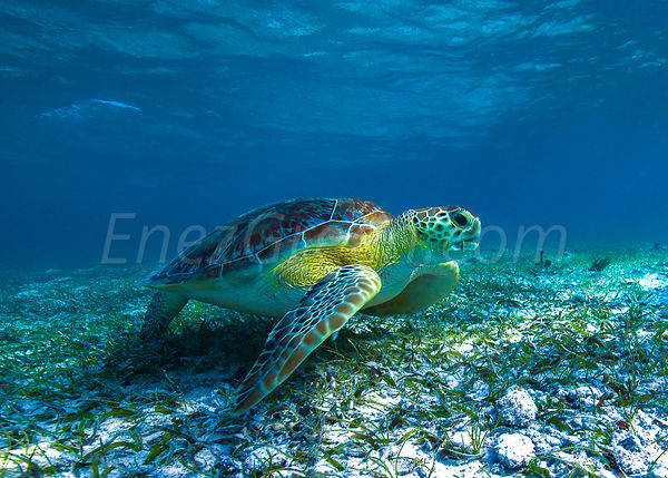 Grand Cayman snorkeling pictures