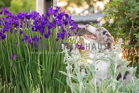 smiling dog sitting in flower garden looking up