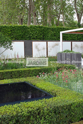 Buxus, Contemporary garden, Digital, Geometrical pool, Hedge, Low hedge, Common Box, Rectangular pool