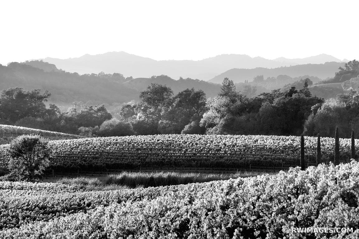 VINEYARD NAPA VALLEY CALIFORNIA BLACK AND WHITE LANDSCAPE