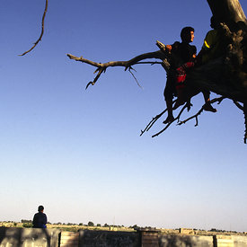 Boys climb what is know locally as the tree of Adam at Al Qurnah near Basra, Iraq