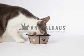 cat eating from pet food bowl