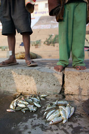 A fisherman's catch on the Ganges River, Varanasi, India.
