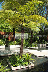Aquatic garden, Exotic garden, Tropical garden, Water garden, Tree Fern