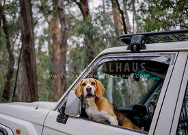 Adelaide Pet Photography by Bitsa Bernard