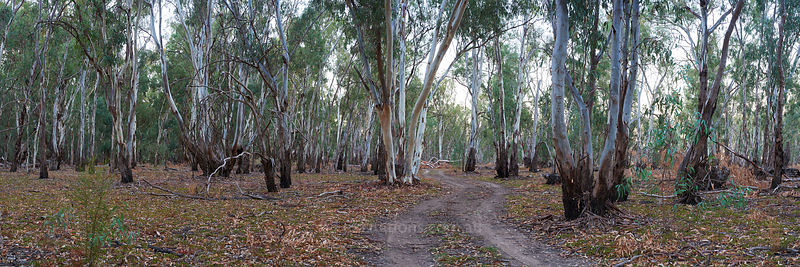 Nyah Vinifera State Forest.