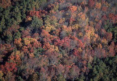 Aerial view of deciduous trees in autumn, Cumberland County, New Jersey, USA