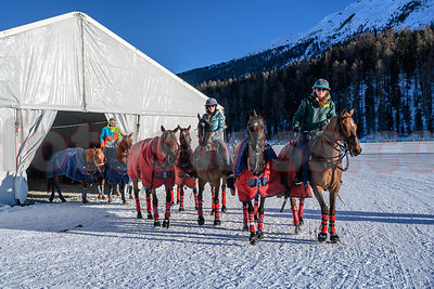 Horses - Snow Polo World Cup 2019 St. Moritz