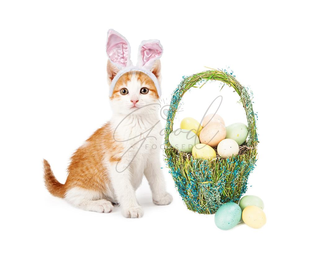 Kitten Siting With Easter Basket