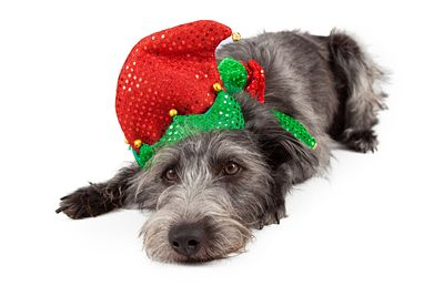 Terrier Dog Christmas Elf Laying