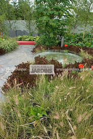 Bush, Contemporary garden, Perennial, Digital, Fountain grass, Grasses, Scenery