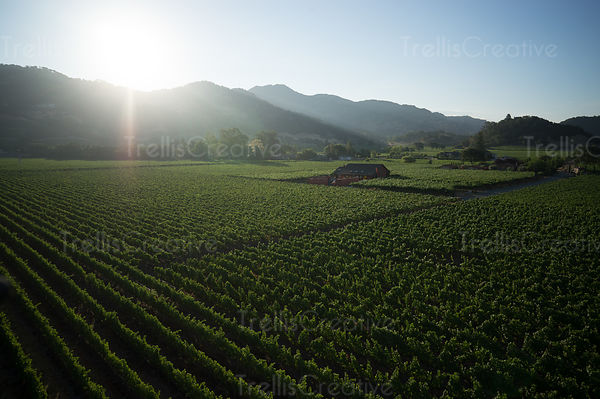 State Ranch Vineyard, Yountville, add to stock, aerial, aerial photo, aerial view, agriculture, birds eye view, birdseye view...