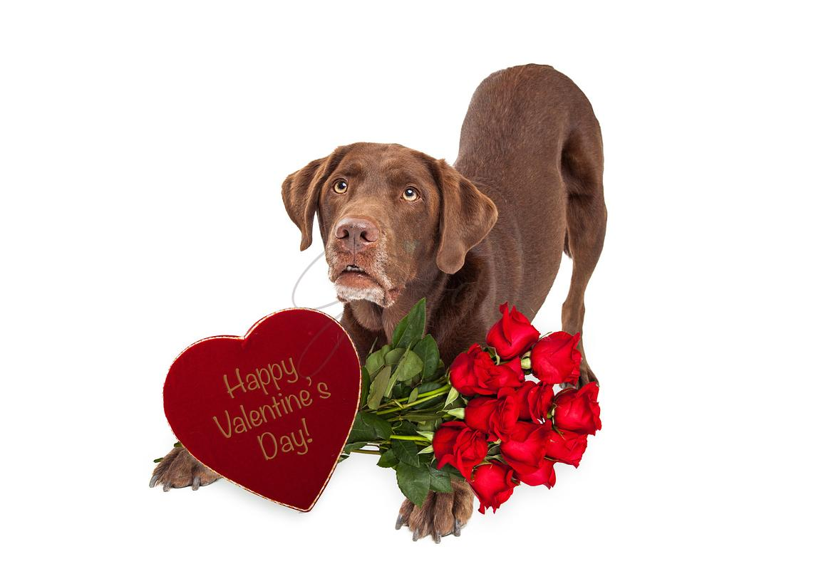 Chocolate Valentine's Day Gift Delivery Dog