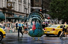 Large male turkey near Herald Square; illustration