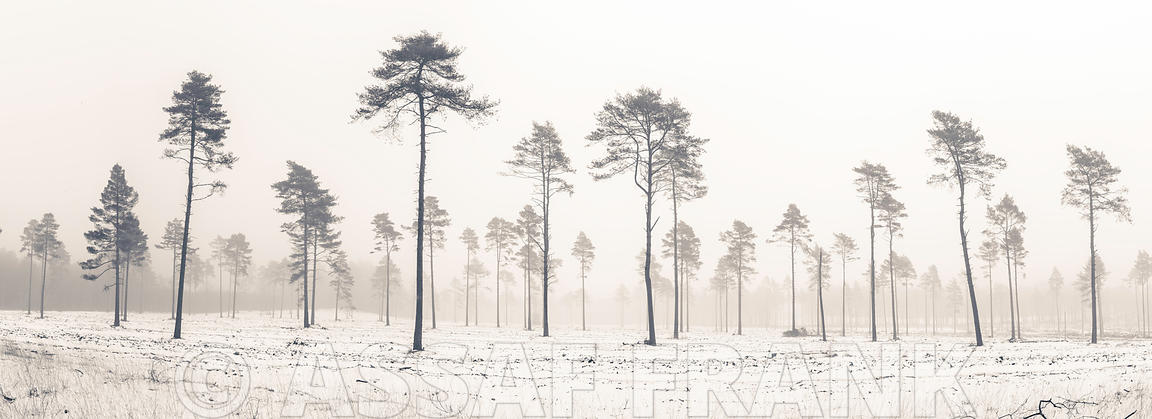 Snowy forest in winter