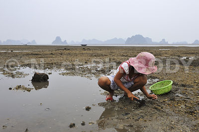 CAI RONG, PECHE, BAIE DE HA LONG, VIETNAM // Vietnam, Ha Long Bay, Cai Rong Fishing
