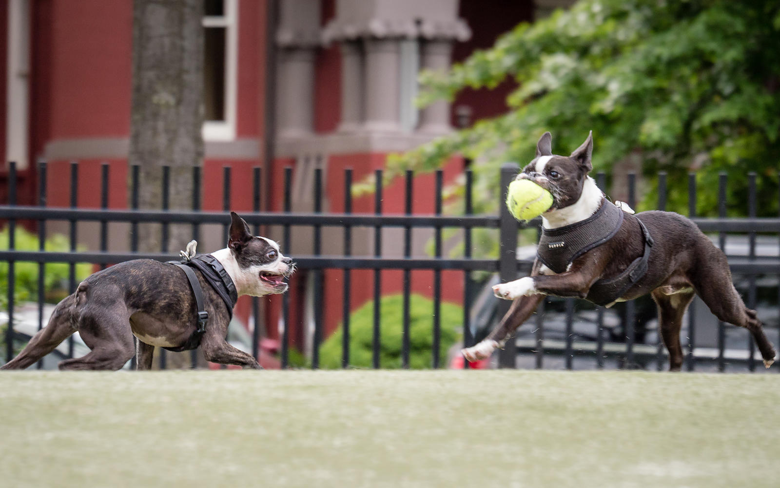 CircleDogs-20160519-106