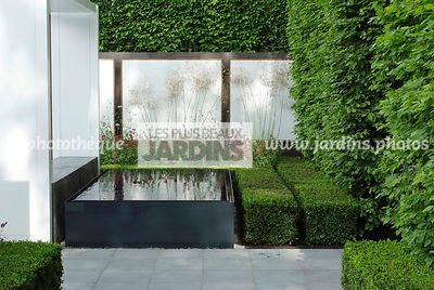 Buxus, Contemporary garden, Digital, Geometrical pool, Hedge, Low hedge, Pavement, Common Box, Rectangular pool
