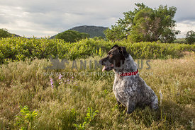 mixed breed dog sitting in tall grass
