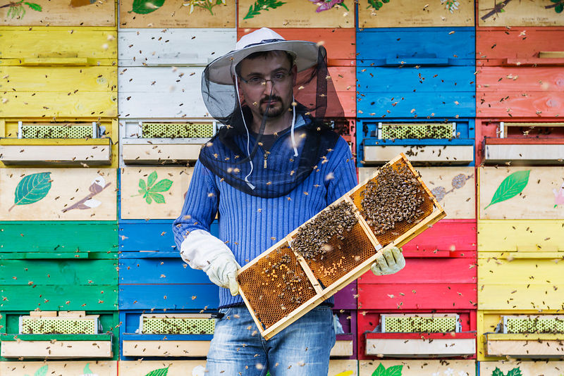 Bee Keeper Holding a Frame from a Beehive