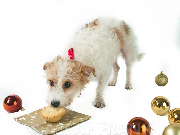 Dog stealing a christmas mince pie