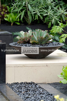 Jardin exotique, Jardin contemporain. Potée design : Echeveria, succulente. Galet noir. Designers : David Cubero et James Won...