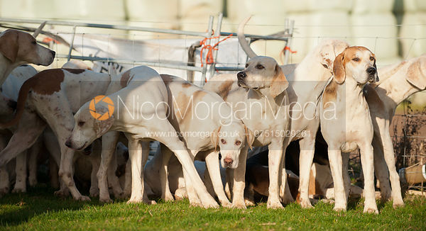 The Quorn foxhounds