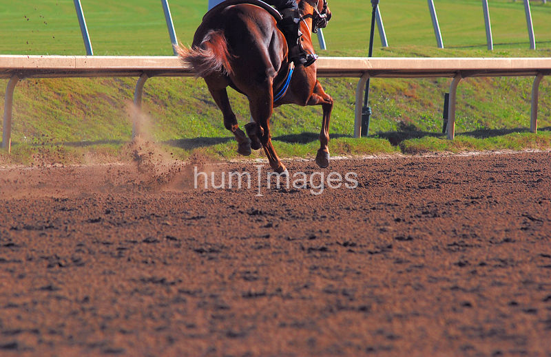 Race horse feet only kicking up dirt