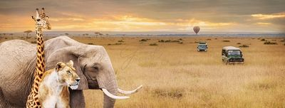 Safari Animals Africa Scene Web Banner