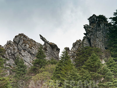 Shennongjia National Park, china, low angle view view