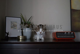 tabby cat on dresser with clock and plant