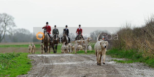 Cottesmore hounds at end of day