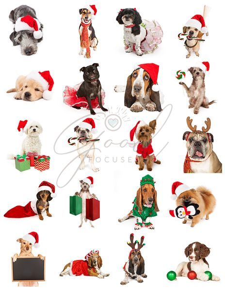 Set of Christmas Dog Photos