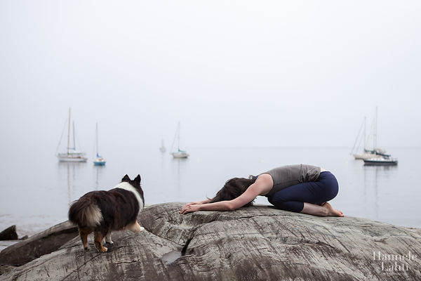 Maine Yoga Dog