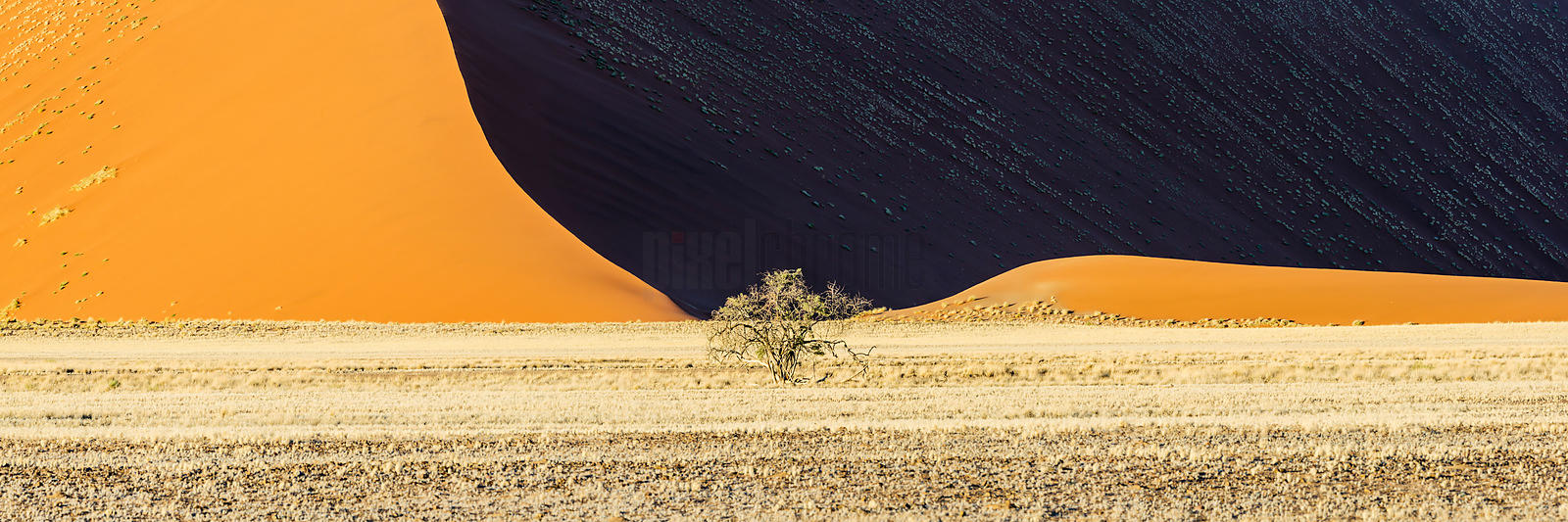 Lone Tree and Sand Dune