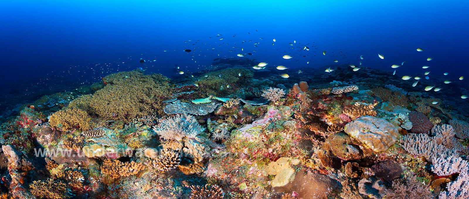 Panoramic underwater reef view