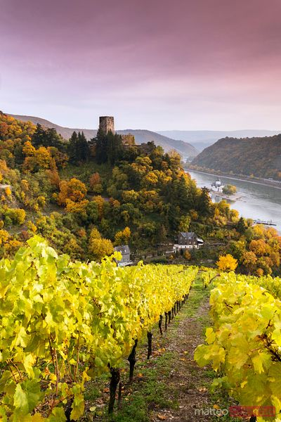 Burg Gutenfels and vineyards over river Rhine at sunset, Germany