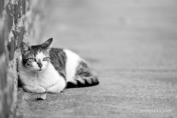 CAT KEY WEST FLORIDA BLACK AND WHITE
