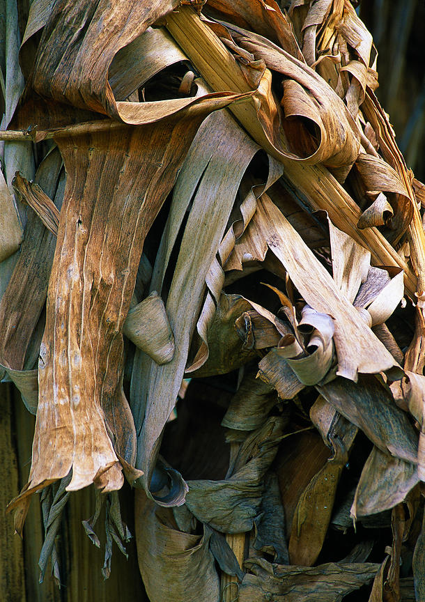 banana_leaves_8